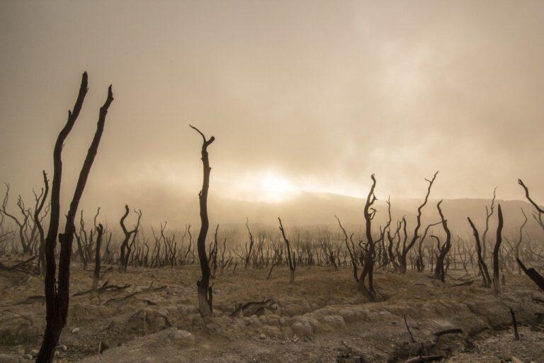 Co Polacy wiedzą na temat zmian klimatycznych?